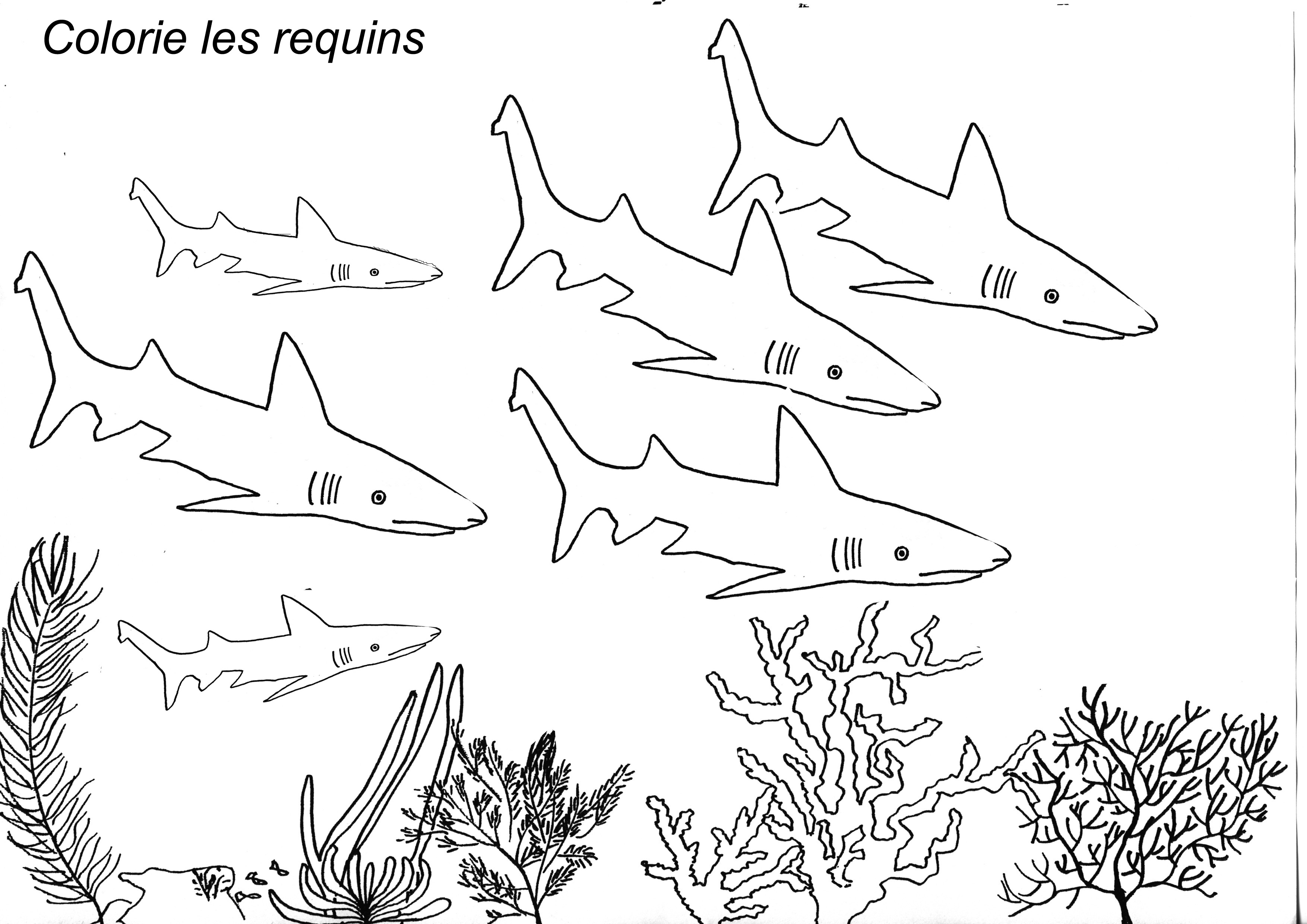 colorie des requins